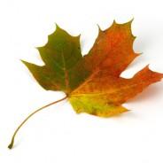 Jesień – w co zagrać